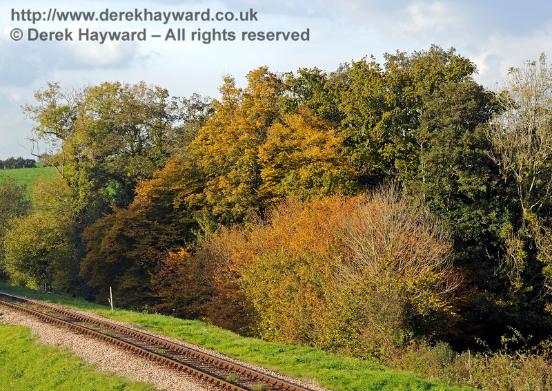 The same trees in 2015, giving a rather more powerful autumn tints display. 20.10.2015 12282