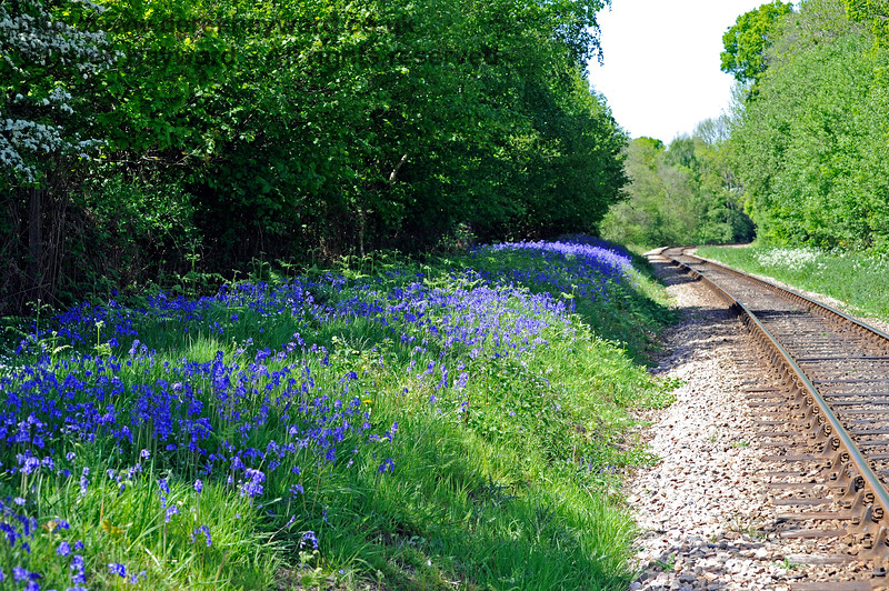Approaching Lindfield Wood, the western side of the track often has a good display of bluebells but the quality of the flowers depends almost entirely on whether the lineside growth has been cut back in time for the bluebells to appear.  This view looks north.  03.05.2011 1058