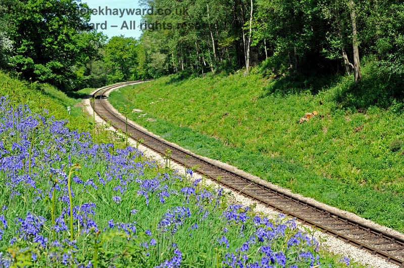 Looking north in Lindfield Wood two months after the lineside clearance previously pictured.  The bluebells are in bloom.  03.05.2011 1041