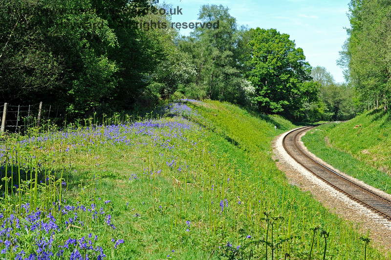 Looking north in Lindfield Wood two months after the lineside clearance previously pictured.  The bluebells are in bloom.  03.05.2011 1057