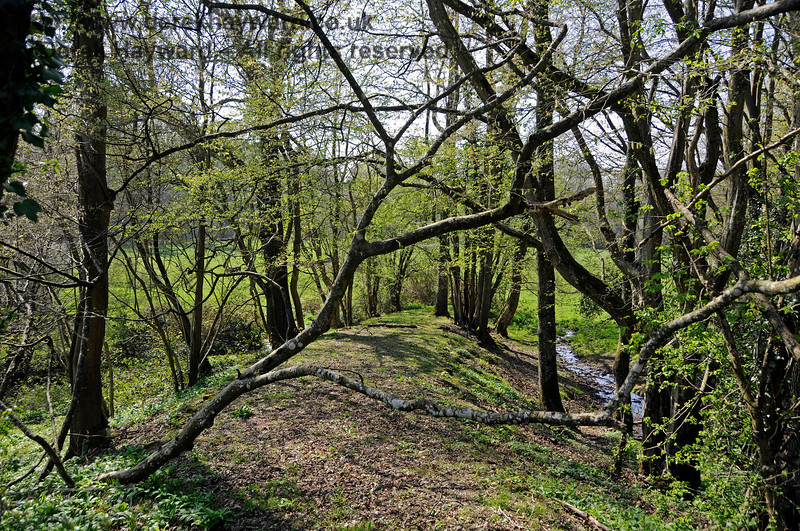 The stream carrying the water away from the culvert in Lindfield Wood can be seen on the right.  In the centre of the picture a low embankment leads toward the railway, marking the route of a long abandoned agricultural crossing.  08.04.2017 17079