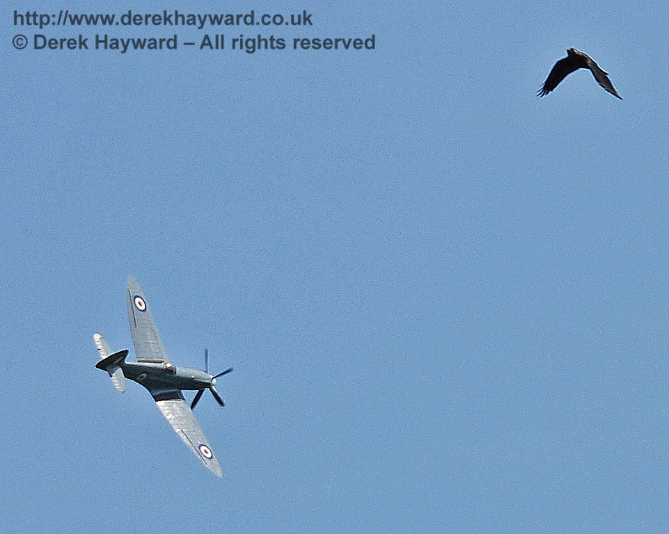 The Spitfire flys in formation with a local crow (or vice versa)! Horsted Keynes 11.05.2008