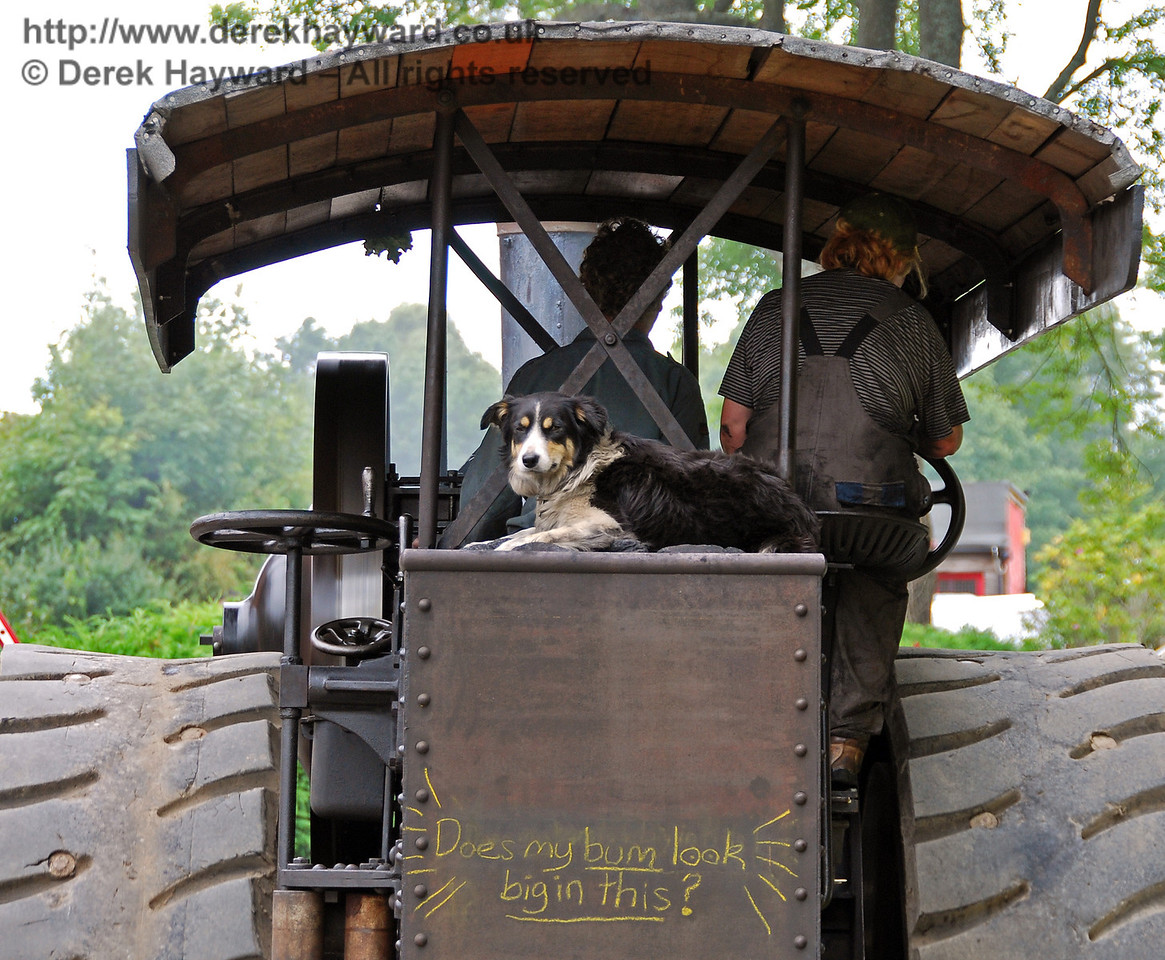 The traction engines were herded by a very efficient dog.  It makes a change from rounding up sheep... 16.08.2008