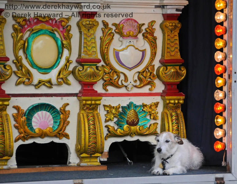 In charge of the organ was this amazingly well behaved (but presumably deaf) dog. Sheffield Park 21.08.2010  4124