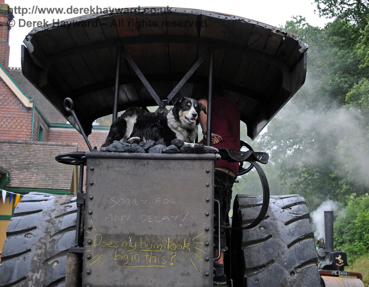 The dog was having great fun. Horsted Keynes 21.08.2010  4239