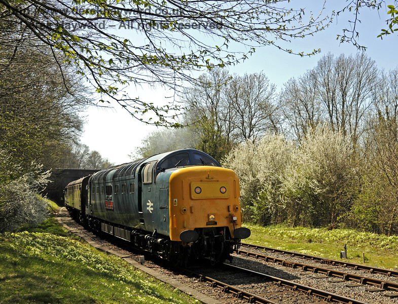 55019 Royal Highland Fusilier amongst the flowers north of Leamland Bridge.  18.04.2015  12240