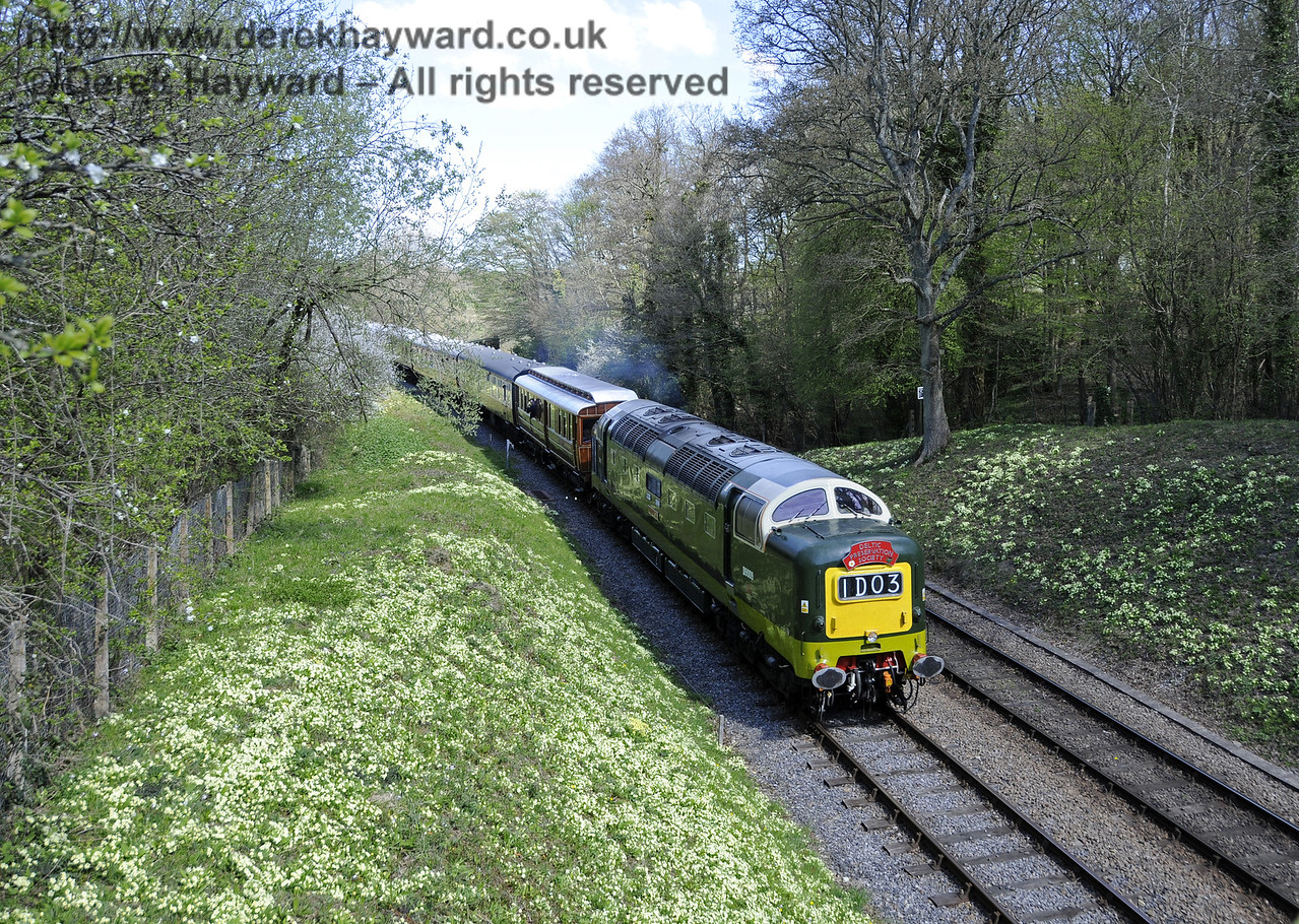 D9009 Alycidon amongst the primroses at Leamland Bridge.  18.04.2015  12231