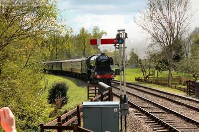 Flying Scotsman passing through the verdant, lush spring countryside