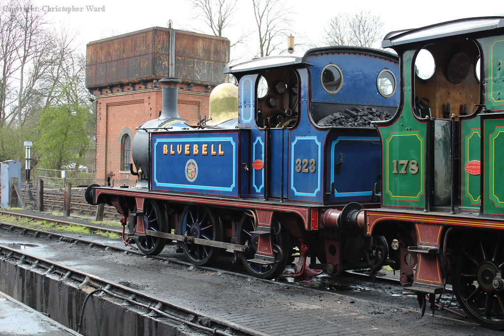 323 Bluebell sits in the yard