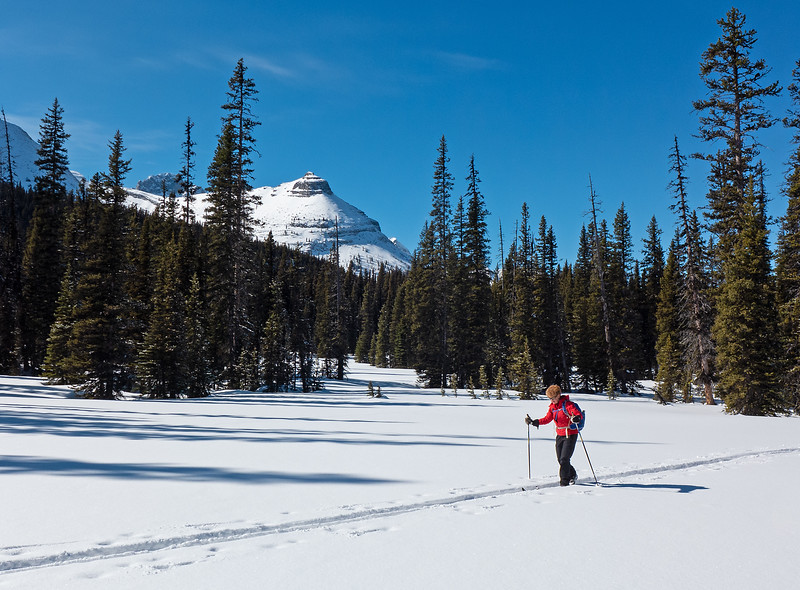 Leaving Blueberry trail, we took the higher line south into the West Elk Pass Meadows.