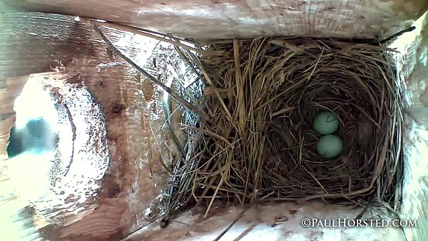Bluebirds 5 11 18 compiled 2nd egg