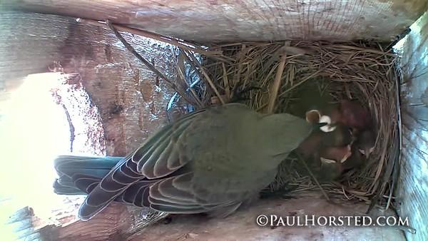 Bluebirds 5 31 18