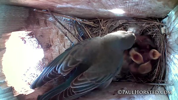 Bluebirds 6 4 18 and earlier