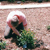Randal Planting a Gardenia That The Deer Would Later Eat - July 2001
