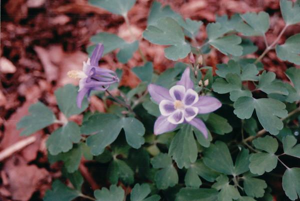 2001 Garden at Bluebird Cove
