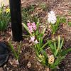 Springtime Splendor