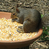 Yummy Yummy It All Tastes Better After Prayer Says the Squirrel