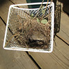 Nest from Front Porch with Dead Juvenile Finch