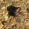 Snail From The Garden - Pretty Shell