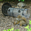 This Year's Crop of Squirrels Enjoying the Fallen Feeder