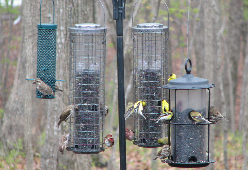 I Can Count 17 Birds - Variety of Finches