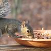 Yummy Squirrel Enjoy Fruit and Nut Mix on Deck