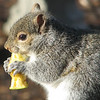 Hey Enough Already with the Pictures - Eastern Gray Squirrel