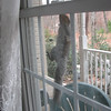 Squirrel Climbing Dining Room Window Screen