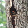 Look How Perfectly Round That Woodpecker Hole Is