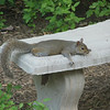 We Have Squirrels Who Know How to Relax