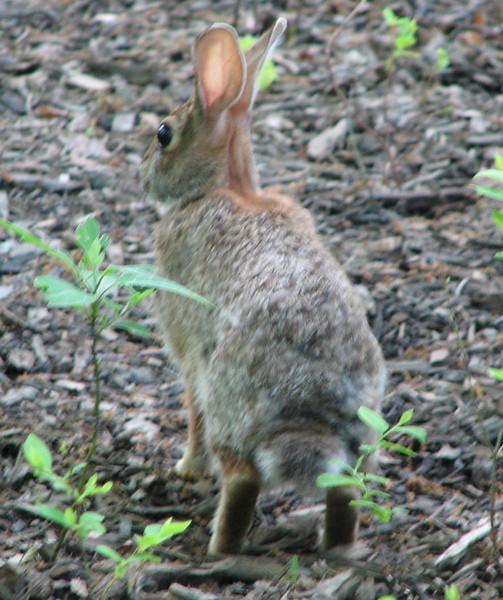 I'll Keep Hopping Along Like Rabbits Do