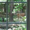 Deer at Pond Watching Me Watching Her