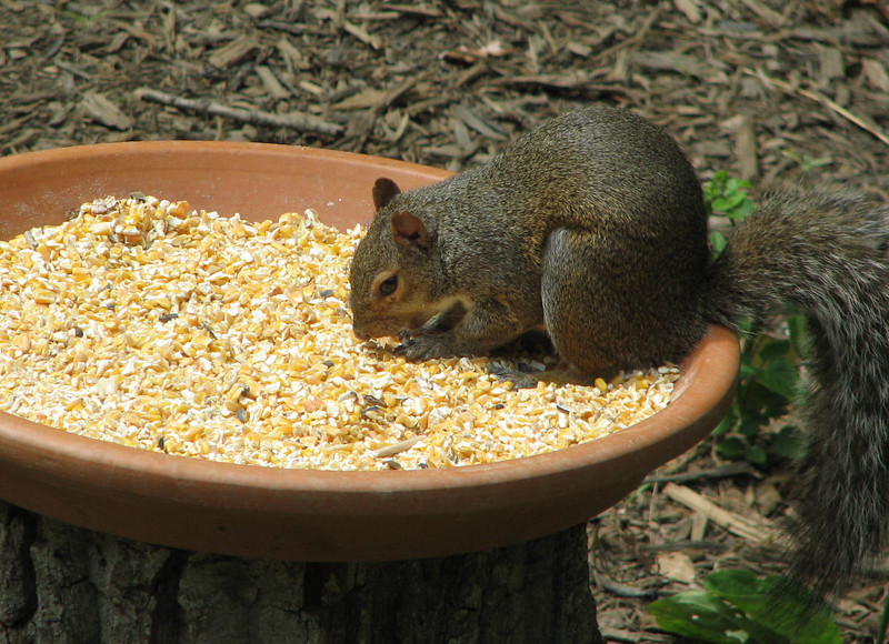 I Thank You Lord for the Food I'm About to Eat Says the Squirrel