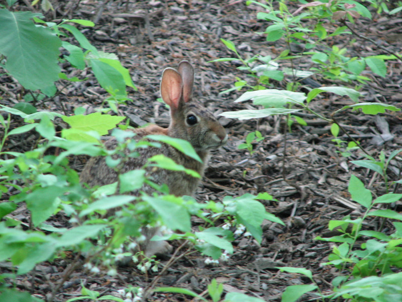 Oh Uh They Found Me - Young Rabbit