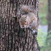 Squirrel Eating Acorn Outside Guest Room Window