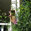 Our New Bee House for Mason and Orchard Type Bees