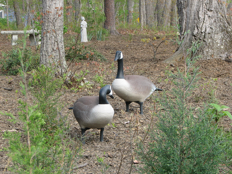 Our Geese Are So Happy