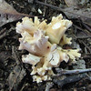 Fungus in Backyard