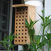 Our New Mason Bee Box for Nesting
