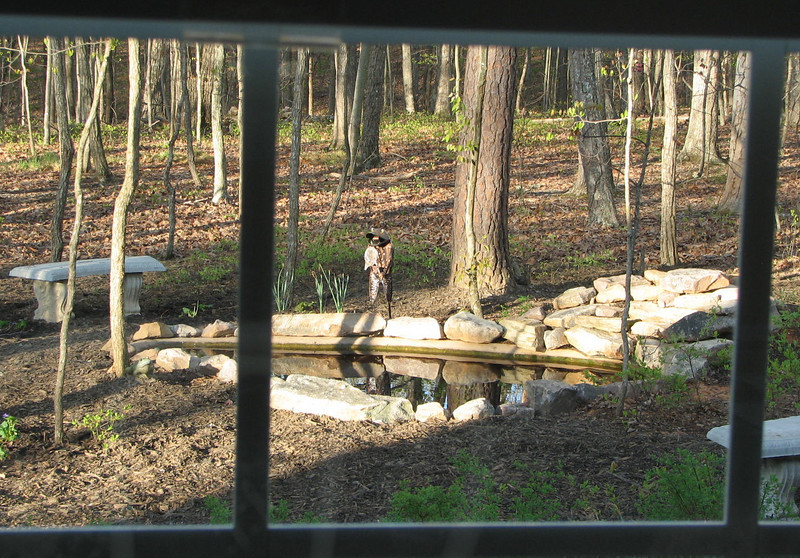 View from Kitchen Window