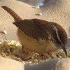 Wren - My Favorite Bird