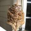 Praying Mantis Egg Case Found While Cutting Back Mums - March 11
