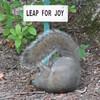 Oh Boy - Joy Joy Joy