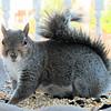 Squirrel Grin