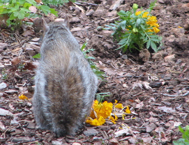He Thought We Wouldn't Know Who It Was, But This Squirrel Has a Short Tail