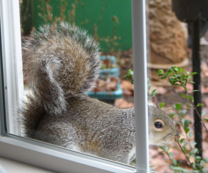 Any Room At The Inn for a Winter Squirrel