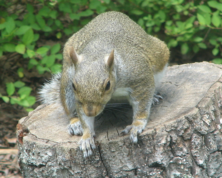 I Think I'll Get Up And Get Back To Work, Says The Squirrel