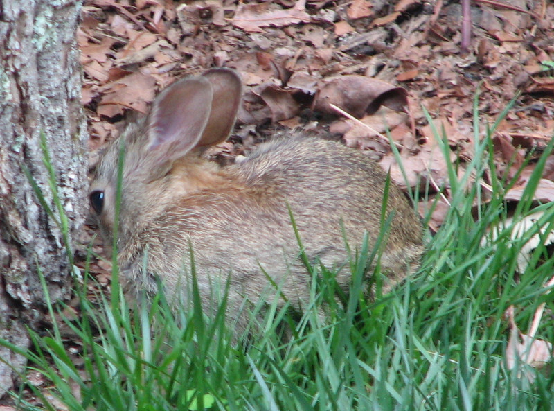 Bunny in the Grass - One of This Year's Little Ones