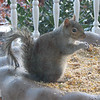 The Squirrels Have Entertained Us This Winter