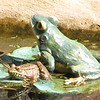 Green Frog on Lily Pad Frog From Dotty